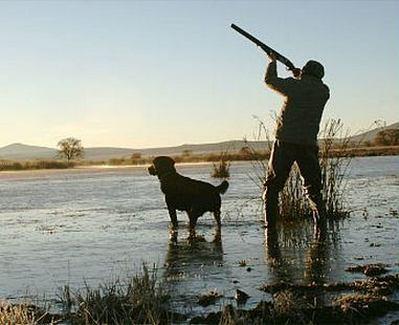 Cacciatore con cane in zone umide