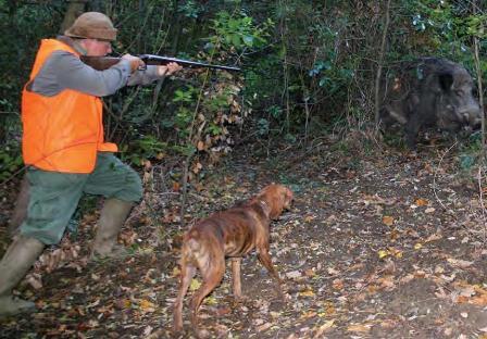 tecnica di caccia: posta al cinghiale
