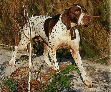 Assicurare il cane può essere un obbligo o un dovere da parte del proprietario.