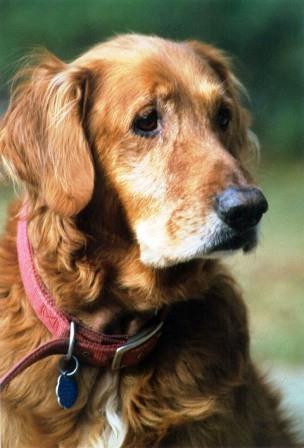 alimentazione cane anziano