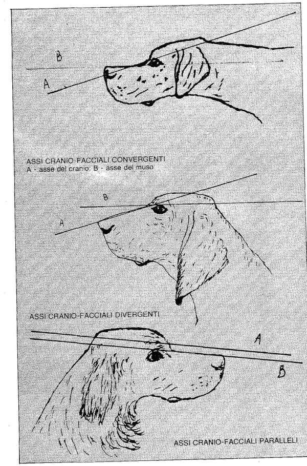 classificazione cani da caccia