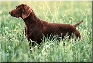 anagrafe canina per il cane da caccia