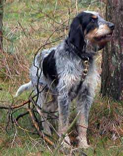 Stancante e fastidiosa la Tracheobronchite infettiva canina, più famosa come tosse dei canili, può essere facilmente diagnosticata e curata con delle semplici attenzioni