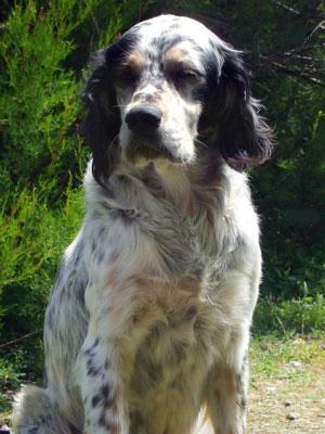 La tenia: uno dei più comuni parassiti del cane
