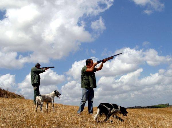 Cacciatori e cani