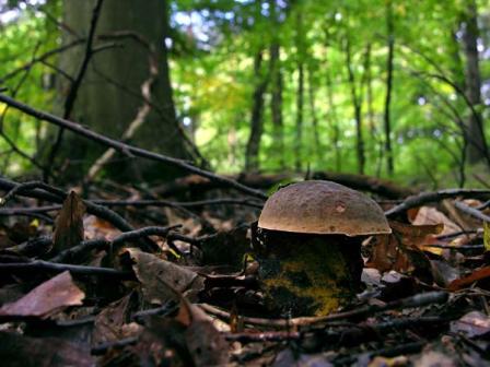 Cercatore di funghi ucciso per errore in provincia di Arezzo