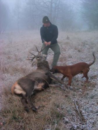 Il primo cervo