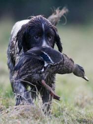 Cani Da Caccia Addestrare Al Meglio Un Cane Da Caccia Caccia Passione