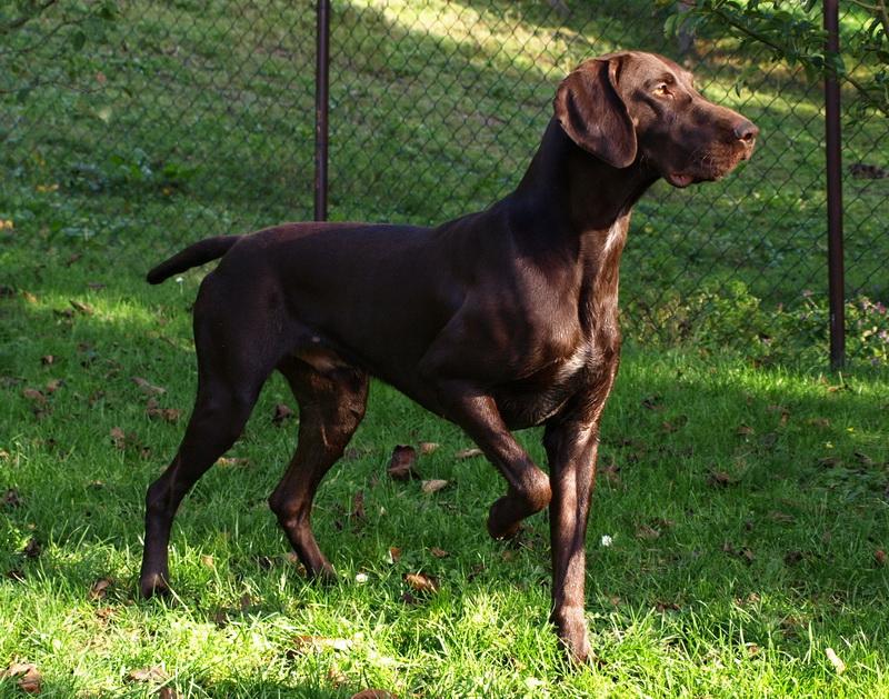 Circuito internazionale di prove di caccia per cani di razza continentale su selvaggina tipica di montagna
