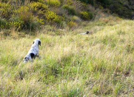 2° Memorial Evandro Pallini, per cani da ferma su starne e speciale Cani da cerca su fagiani.