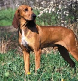 Prova nazionale cani su traccia e combinata alpina - Concei (TN) 7 e 8 maggio 2011