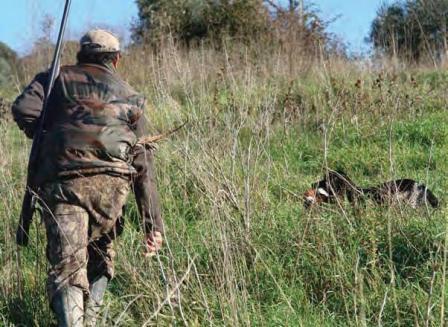 Sospensione della caccia