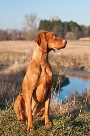 36 Campionato Del Mondo Per Cani Da Ferma E Suberto Caccia Passione