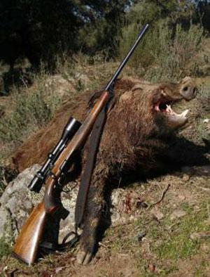 Caccia al cinghiale trucchi per cacciare il cinghiale all for Costo della costruzione del fucile da caccia
