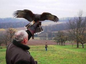 Cani da falconeria