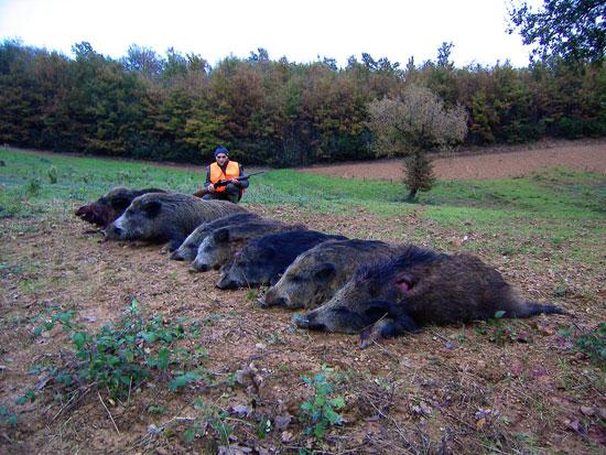 Carabine e calibri per la caccia al cinghiale caccia for Costo della costruzione del fucile da caccia