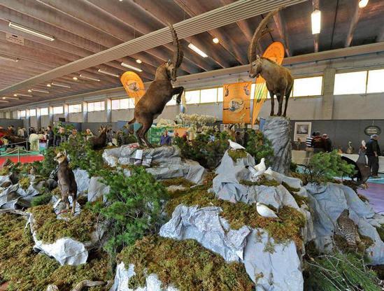 Diorama tassidermia - Trofei di caccia