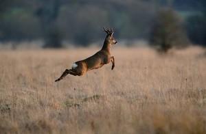 Prove di caccia in Ungheria