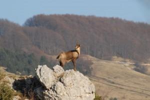 Caccia in Abruzzo