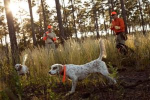 Cani da ferma su starne o quaglie
