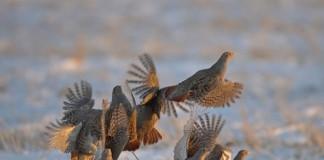Influenza aviaria