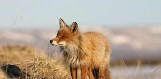 Controllo della fauna selvatica