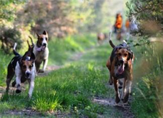 Cani da seguita