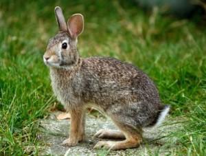 Gara a squadra su coniglio