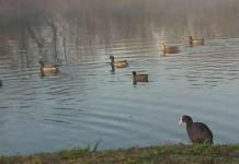 Grandi carnivori e uccelli acquatici