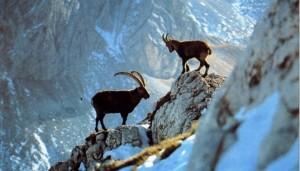 Storia della caccia alpina