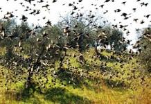 Calendario venatorio 2018-2019 della Toscana