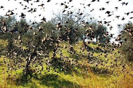 Regione Puglia Calendario Venatorio.Regione Puglia Interrogazione Per Far Partire La Caccia
