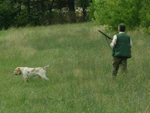 Disturbo e molestie alla caccia