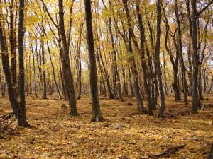 bosco caccia alla beccacia in crimea