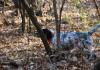 viaggi di caccia beccaccia