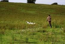 Gara cinofila cani da caccia