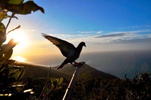 Rotta migratoria dei colombacci