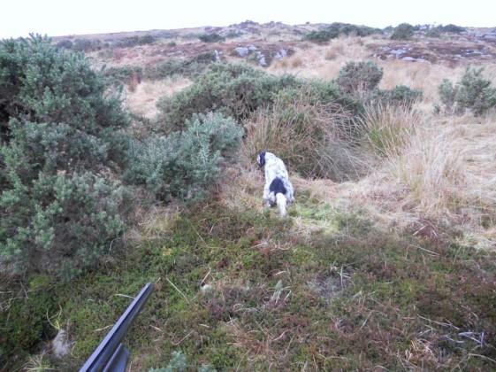 viaggio di caccia in scozia all'isola di bute