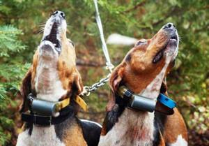 Prevenzione gratuita per i cani da caccia