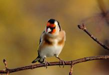Sagra degli Uccelli in Canto
