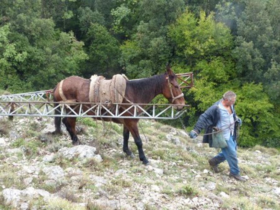Trasporto cavalli da montagna