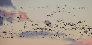 Convegno sulle migrazioni
