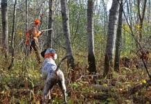 Caccia nel bosco alla beccaccia