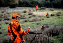 Poste caccia al cinghiale in Maremma