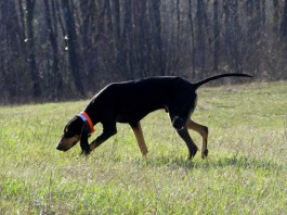 Raduno Nazionale per Cani da Seguita