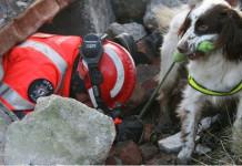 Cane da soccorso macerie