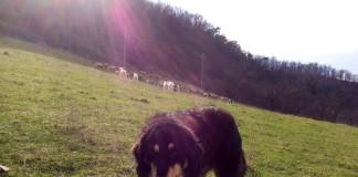 Cacciatori e pastori