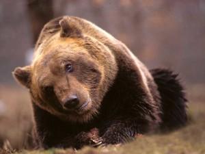 Caccia agli orsi