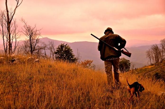 caccia alla lepre con segugio italiano