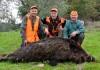 Cinghiali cacciati in Abruzzo